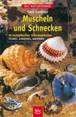 Muscheln und Schnecken an europäischen Urlaubsstränden