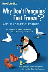 Why Dont Penguins Feet Freeze