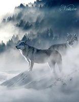 Fantasy Notizbuch: Wölfe im Nebel - weiße Seiten mit Eckmotiv