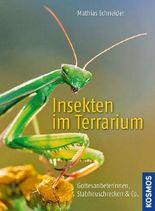 Insekten im Terrarium