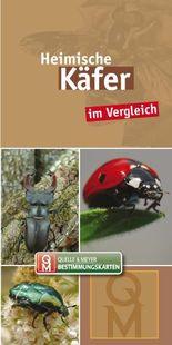 Heimische Käfer im Vergleich