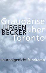 Graugänse über Toronto