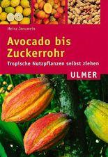 Avocado bis Zuckerrohr