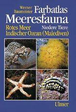 Farbatlas Meeresfauna. Rotes Meer, Indischer Ozean (Malediven) / Niedere Tiere