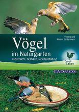 Vögel im Naturgarten