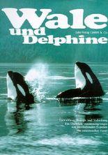 Wale und Delphine