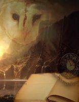 Fantasy Notizbuch: Eulenmagie - weiße Seiten mit Eckmotiv