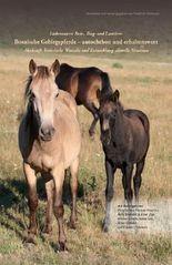 Liebenswerte Reit-, Trag- und Lasttiere: Bosnische Gebirgspferde – autochthon und erhaltenswert