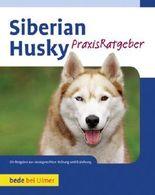 Praxisratgeber Siberian Husky