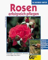 Rosen erfolgreich pflegen