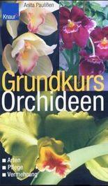 Grundkurs Orchideen