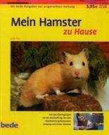 Hamster, zu Hause