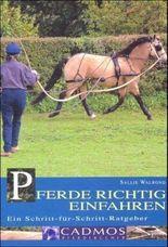 Pferde richtig einfahren