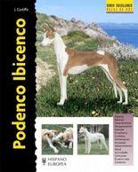 Podenco Ibicenco/ Ibizan Hound