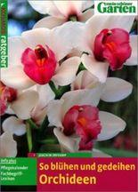 So blühen und gedeihen Orchideen