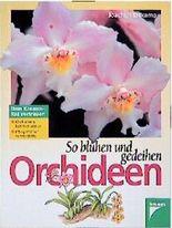 So blühen und gedeihen Orchideen. Orchideen kennenlernen. Pflegefehler vermeiden