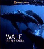 Wale. Delphine und Tümmler