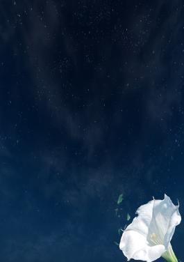 زهرة القمر