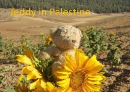 Teddy in Palestine