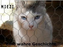 Miezi - Eine wahre Katzengeschichte