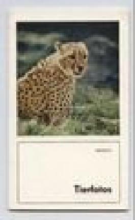 Roland Brinsch: Tierfotos