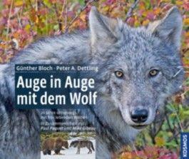 Auge in Auge mit dem Wolf