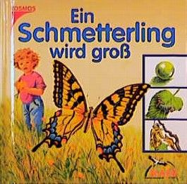 Ein Schmetterling wird groß