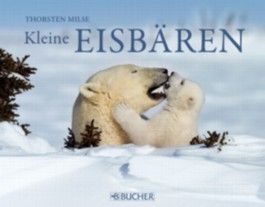Kleine Eisbären