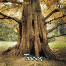 Zauber der Bäume 2011